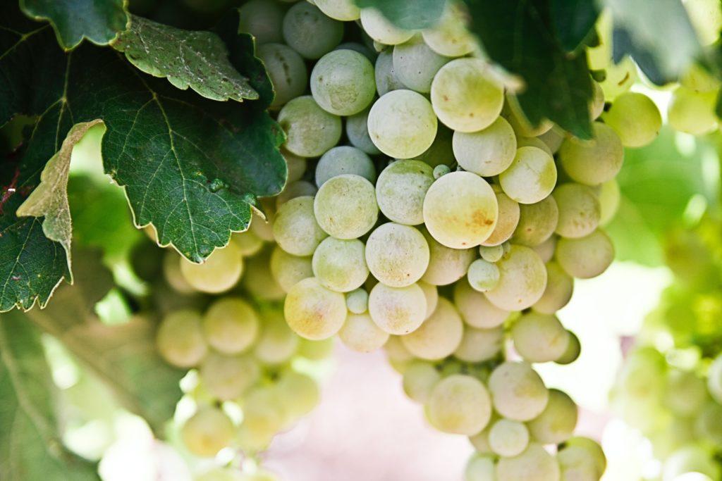 シャルドネ 白ワイン